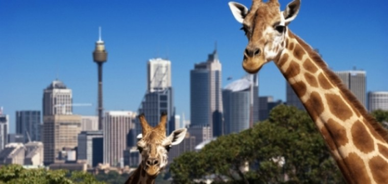 Zapstars Productions meets Taronga Zoo